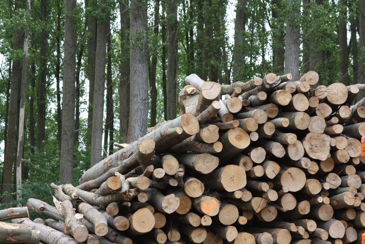 ventajas e inconvenientes de la biomasa